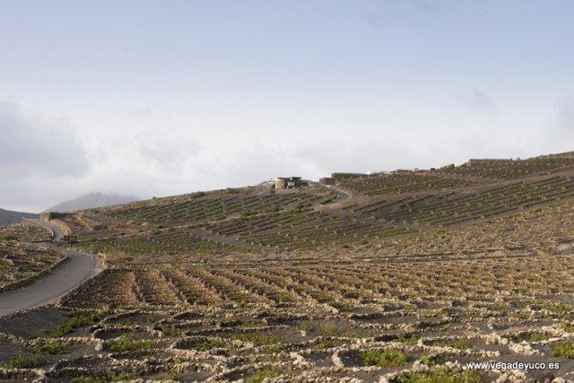 Vegadeyuco.com Bodegas y viñedos en La Geria Lanzarote