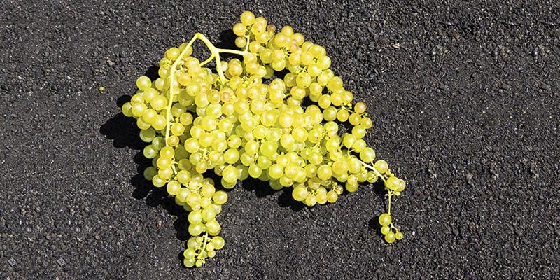 Vegadeyuco.com Weingut und Weinbergen in La Geria